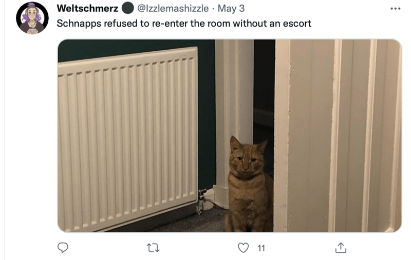 Brown - Weltschmerz @Izzlemashizzle · May 3 Schnapps refused to re-enter the room without an escort 11