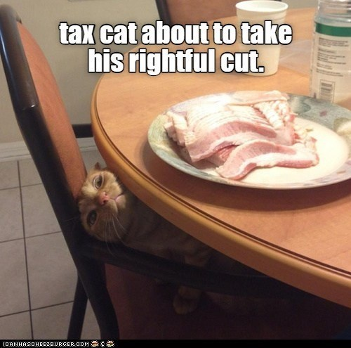 Food - tax cat about to take his rightful cut. ICANHASCHEEZE URGER.COM