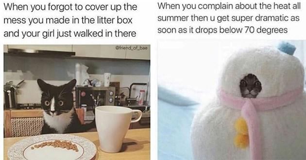 funny cat memes cats