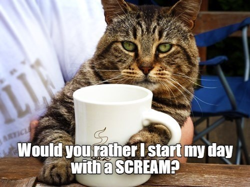 Cat - ARTICLE Would you rather I start my day with a SCREAM?