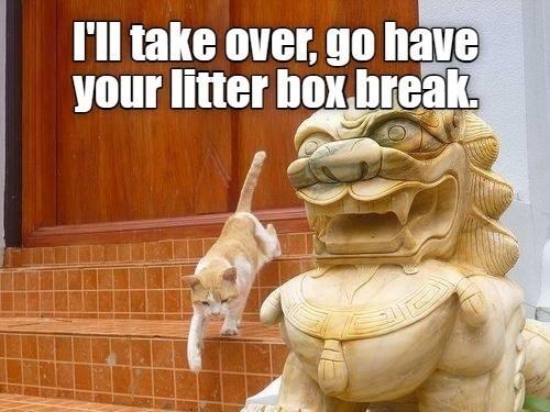 Vertebrate - l'll take over, go have your litter box break,