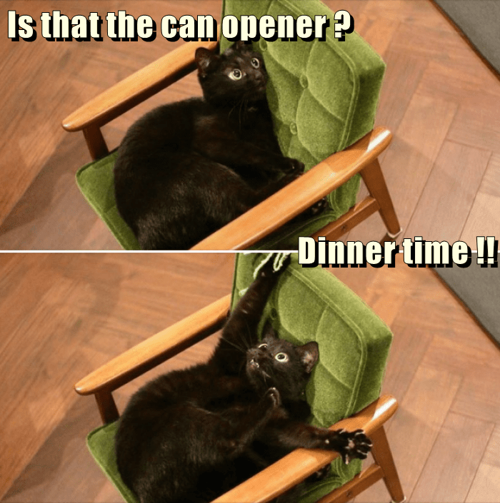Cat - Is that the can opener? Dinner time !