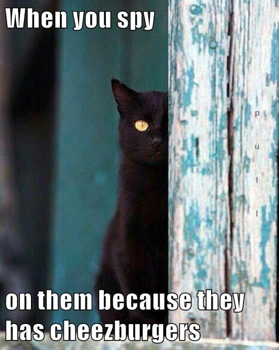 Cat - When you spy P. on them because they has cheezburgers