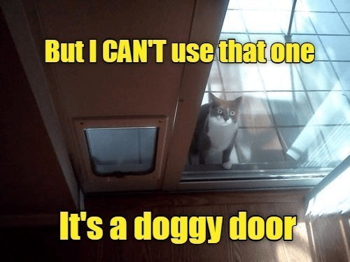 Cat - But I CAN'T use thatone It's a doggy door