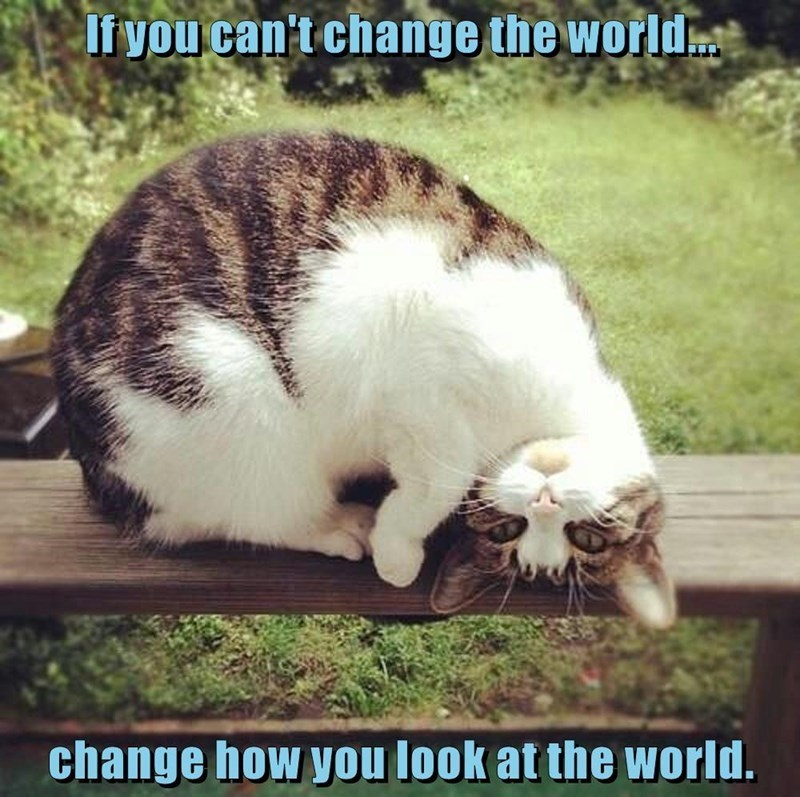 Cat - If you can't change the world. change how you look at the world.