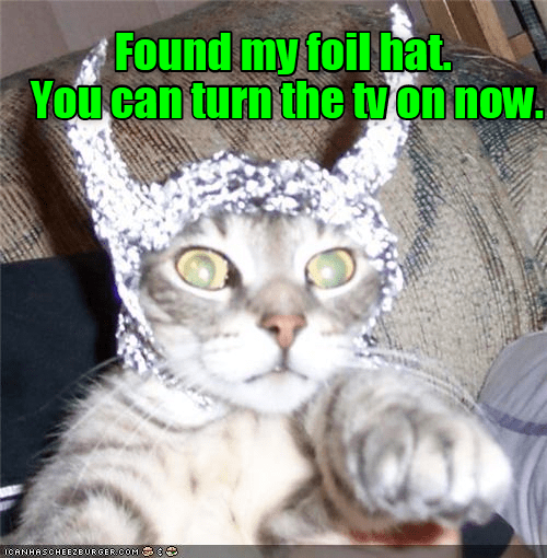Cat - Found my foil hat. You can turn the tvon now. ICANHASCHEEZBURGER.COM