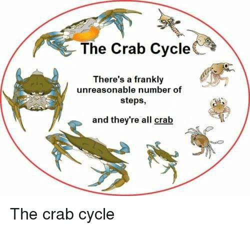 Organism - The Crab Cycle There's a frankly unreasonable number of steps, and they're all crab The crab cycle