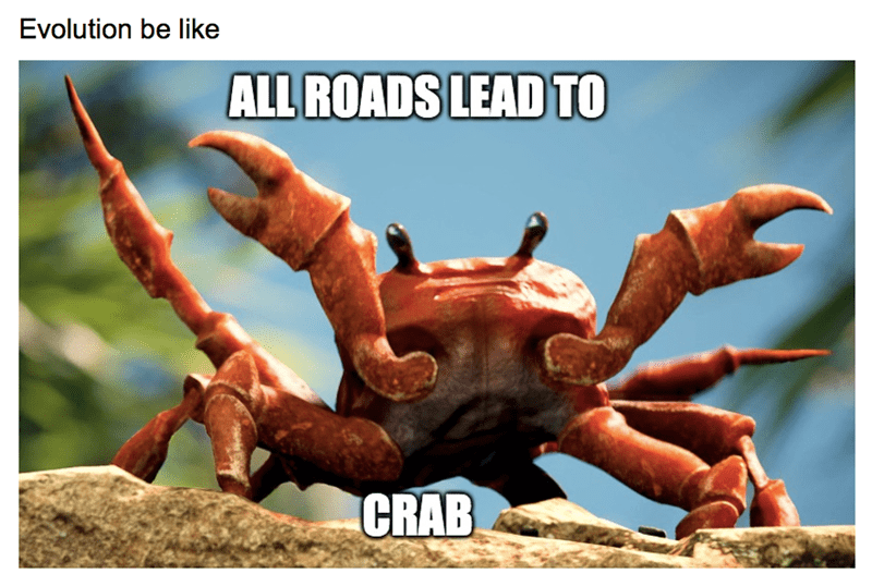 Organism - Evolution be like ALL ROADS LEAD TO CRAB