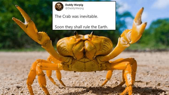 Arthropod - Daddy Warpig @DaddyWarpig The Crab was inevitable. Soon they shall rule the Earth.