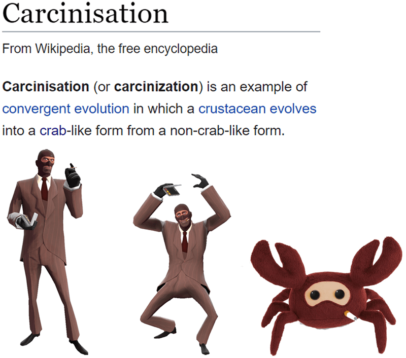 Mammal - Carcinisation From Wikipedia, the free encyclopedia Carcinisation (or carcinization) is an example of convergent evolution in which a crustacean evolves into a crab-like form from a non-crab-like form.