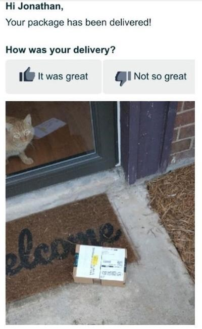 Cat - Hi Jonathan, Your package has been delivered! How was your delivery? It was great CI Not so great olcome