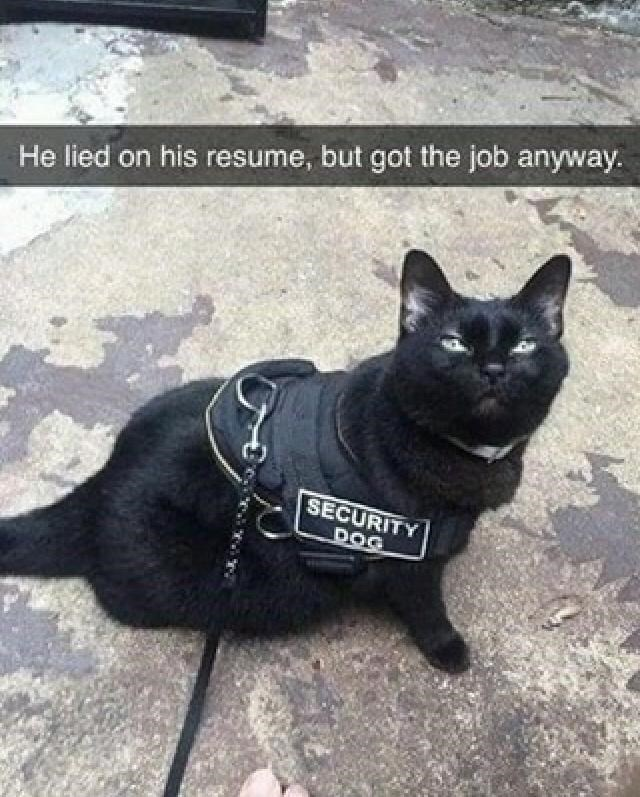 Cat - He lied on his resume, but got the job anyway. SECURITY DOG