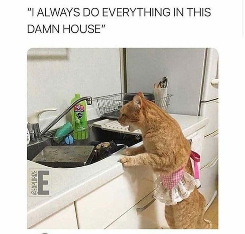 """Dog - """"I ALWAYS DO EVERYTHING IN THIS DAMN HOUSE"""" @EXPLORIZE"""