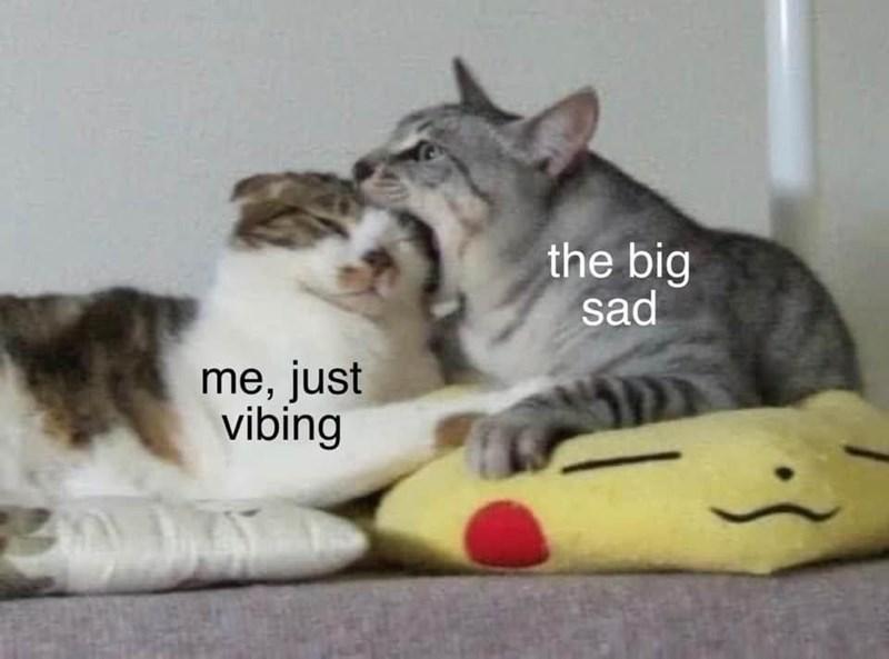 Cat - the big sad me, just vibing
