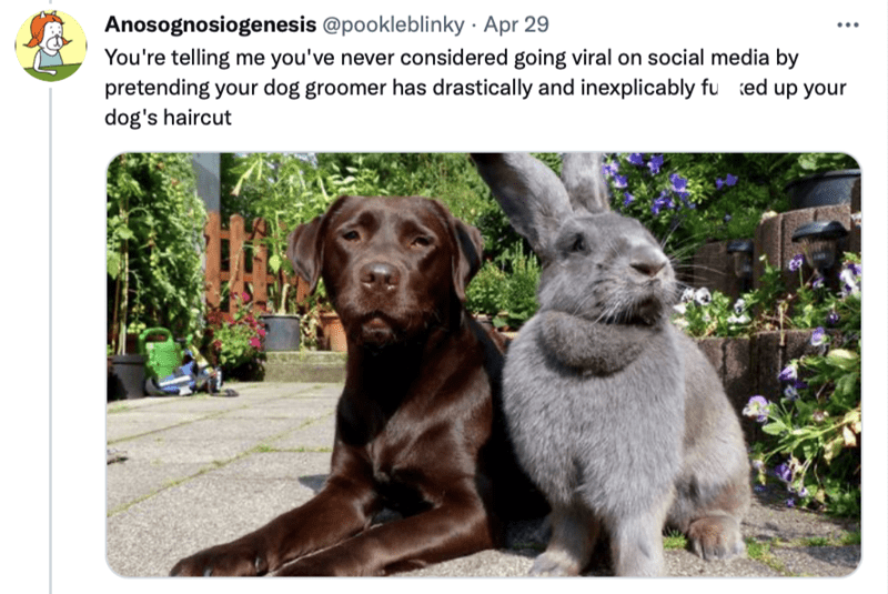Dog - Anosognosiogenesis @pookleblinky · Apr 29 You're telling me you've never considered going viral on social media by pretending your dog groomer has drastically and inexplicably fu ted up your dog's haircut