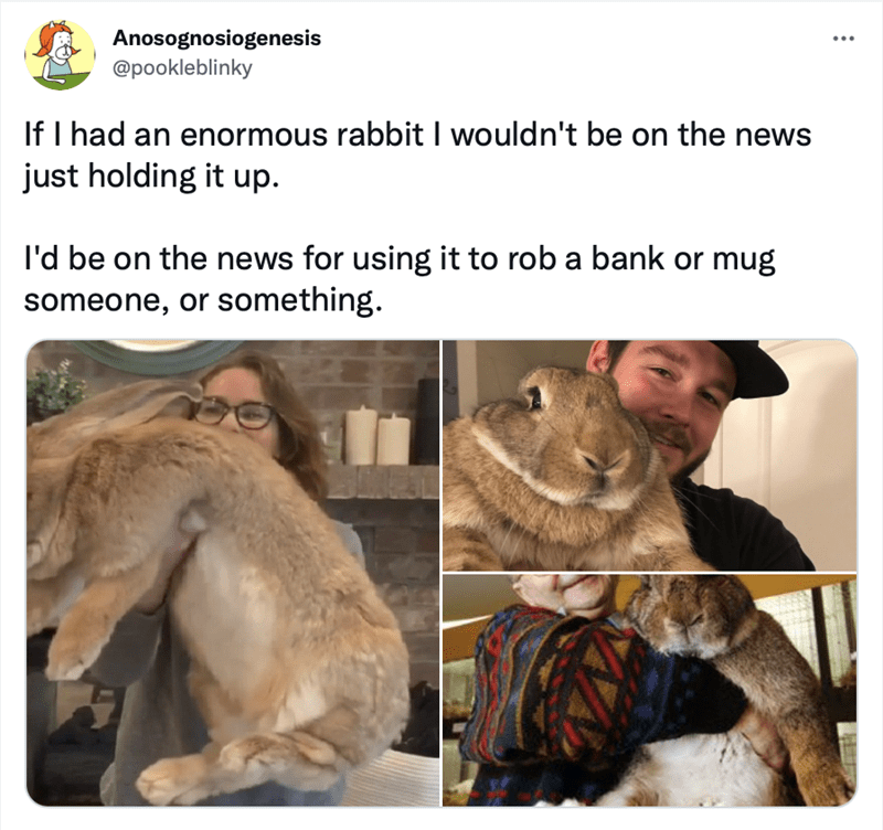 Vertebrate - Anosognosiogenesis @pookleblinky ... If I had an enormous rabbit I wouldn't be on the news just holding it up. I'd be on the news for using it to rob a bank or mug someone, or something.