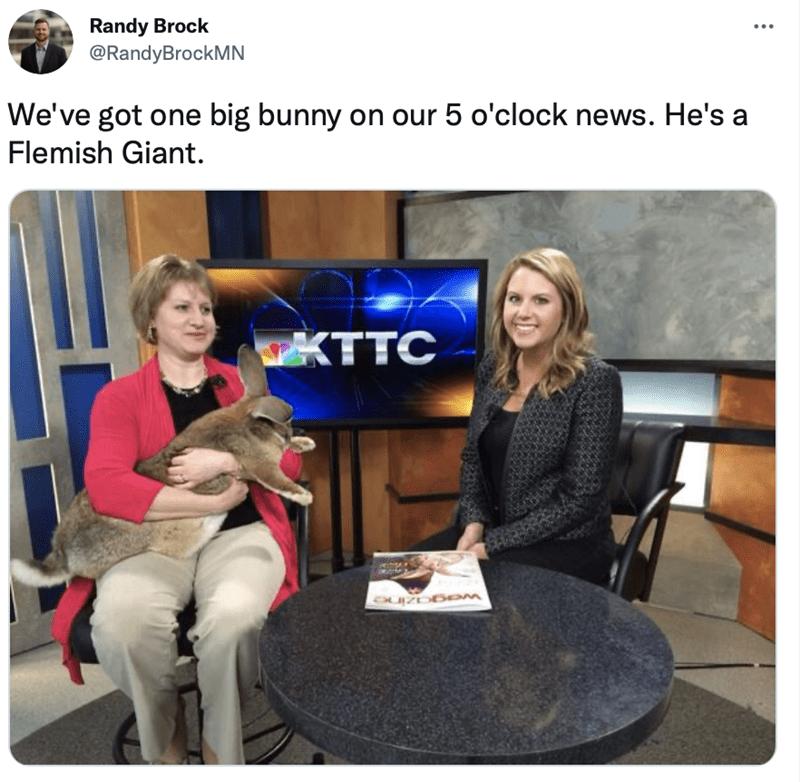 Smile - Randy Brock @RandyBrockMN We've got one big bunny on our 5 o'clock news. He's a Flemish Giant. KTTC