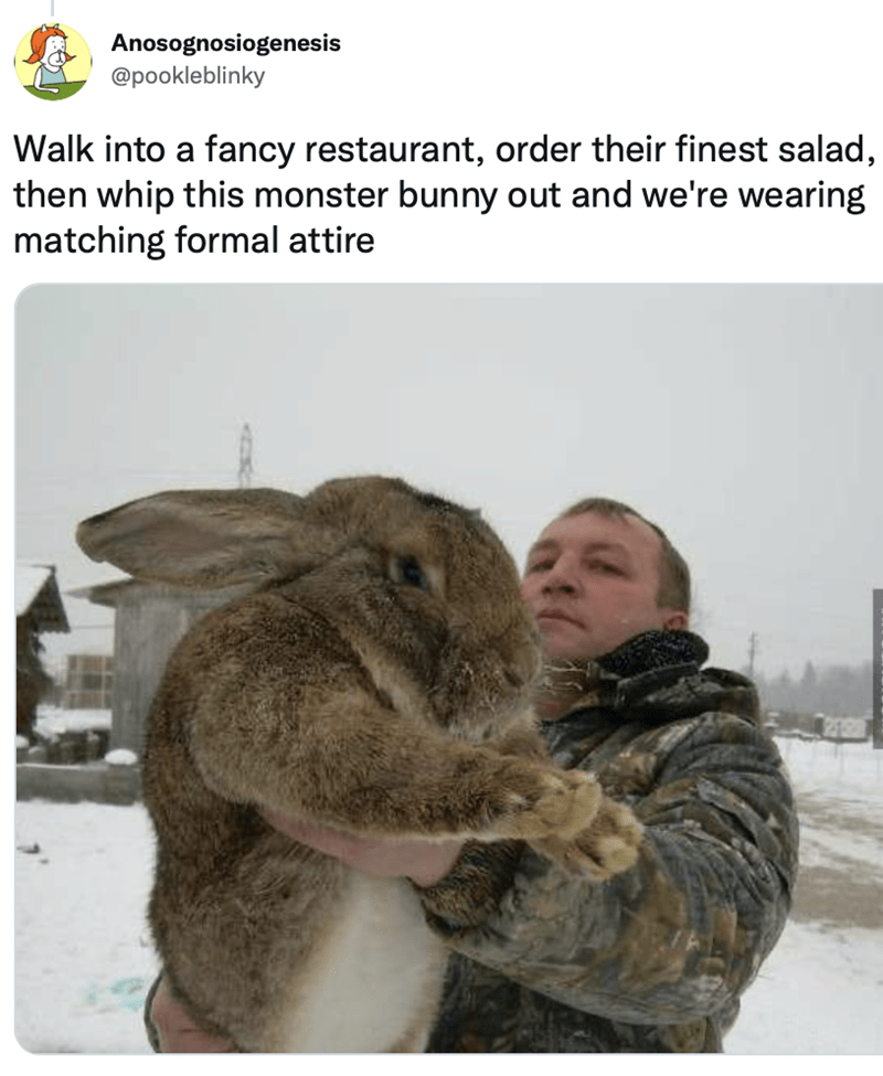 Organism - Anosognosiogenesis @pookleblinky Walk into a fancy restaurant, order their finest salad, then whip this monster bunny out and we're wearing matching formal attire