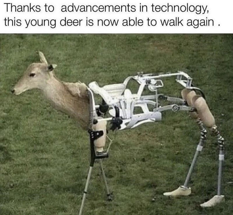 Terrestrial plant - Thanks to advancements in technology, this young deer is now able to walk again .