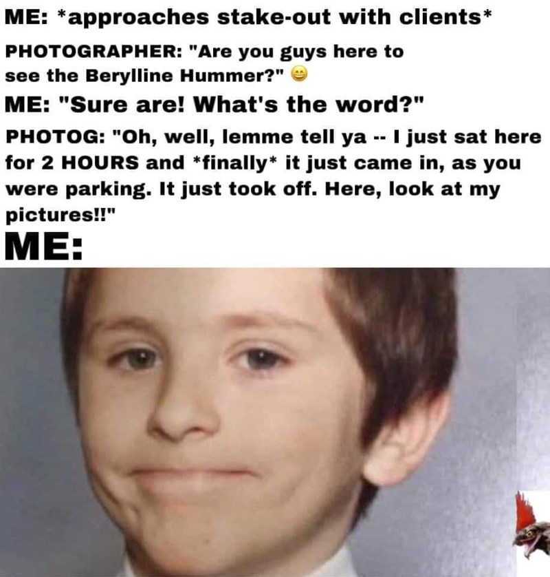 """Forehead - ME: *approaches stake-out with clients* PHOTOGRAPHER: """"Are you guys here to see the Berylline Hummer?"""" ME: """"Sure are! What's the word?"""" PHOTOG: """"Oh, well, lemme tell ya -- just sat here for 2 HOURS and *finally* it just came in, as you were parking. It just took off. Here, look at my pictures!!"""" ME:"""