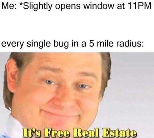 Forehead - Me: *Slightly opens window at 11PM every single bug in a 5 mile radius: It's Free Real Estate