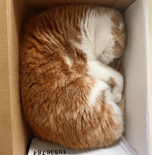 Cat - 10536784