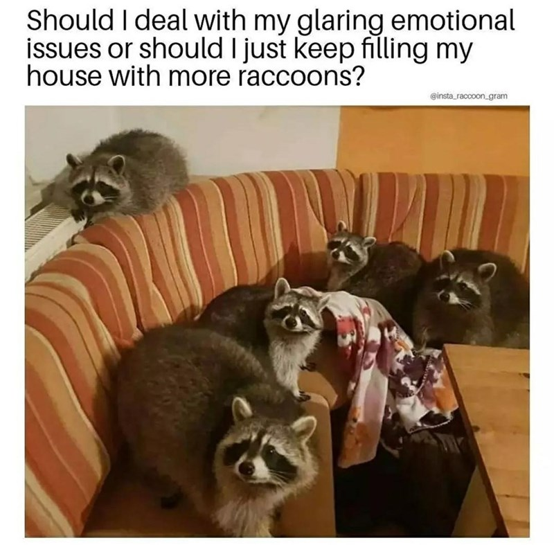 Furniture - Should I deal with my glaring emotional issues or should I just keep filling my house with more raccoons? @insta_raccoon_gram