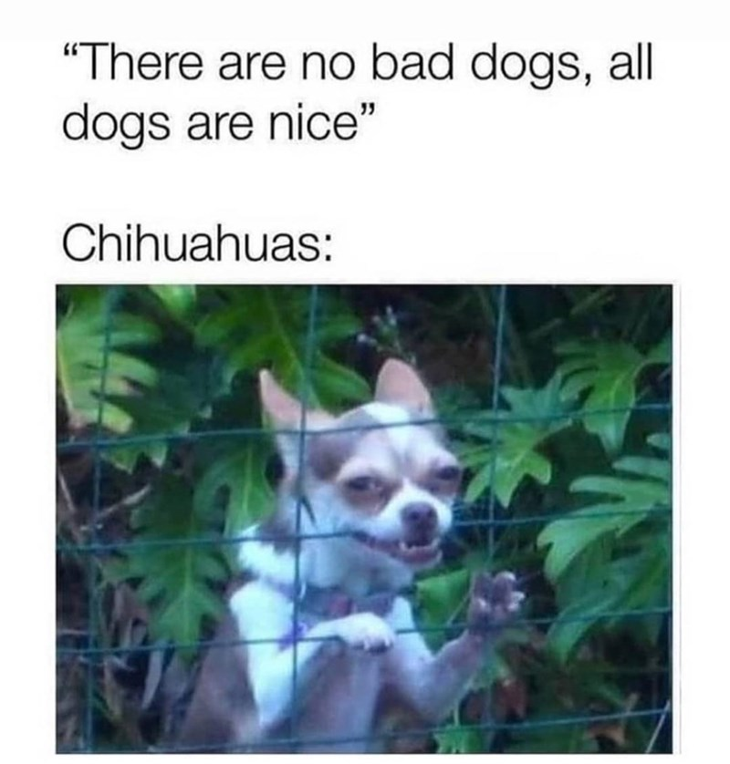 """Dog - """"There are no bad dogs, all dogs are nice"""" Chihuahuas:"""