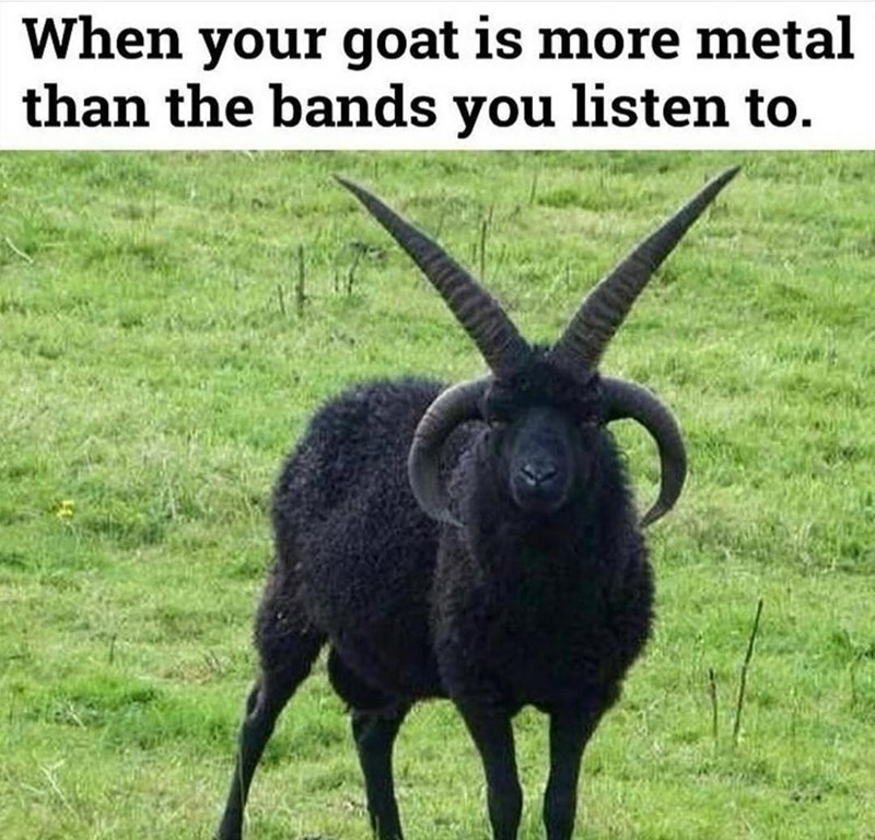 Plant - When your goat is more metal than the bands you listen to.