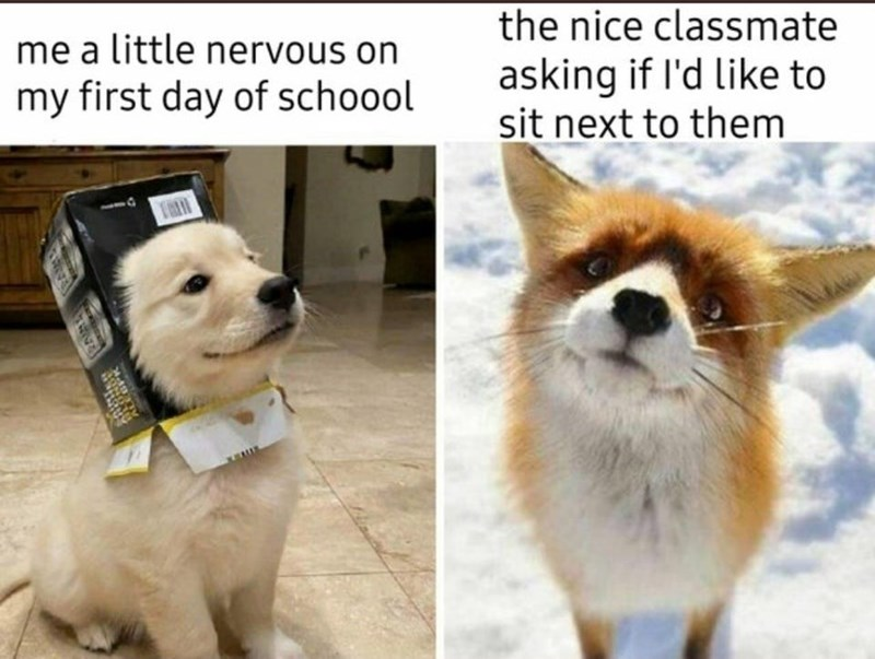 Dog - me a little nervous on the nice classmate asking if l'd like to sit next to them my first day of schoool ram