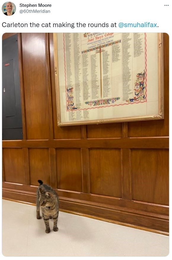 Brown - Stephen Moore @60thMeridian ... Carleton the cat making the rounds at @smuhalifax. Salnr laryo Collegr