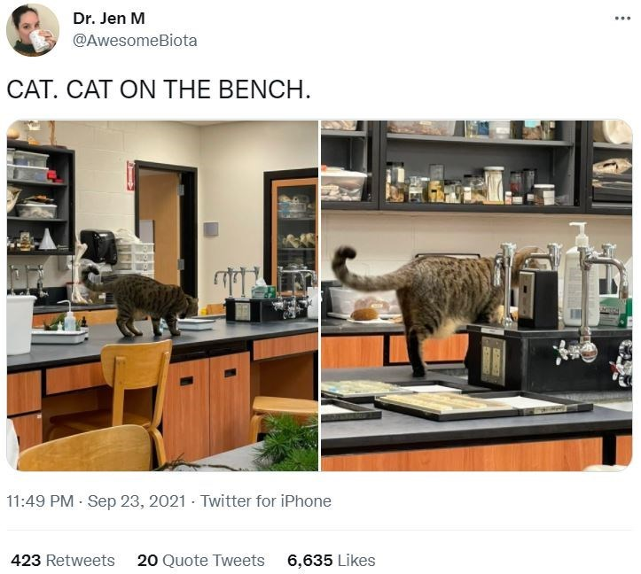 Furniture - Dr. Jen M ... @AwesomeBiota CAT. CAT ON THE BENCH. 11:49 PM Sep 23, 2021 - Twitter for iPhone 423 Retweets 20 Quote Tweets 6,635 Likes