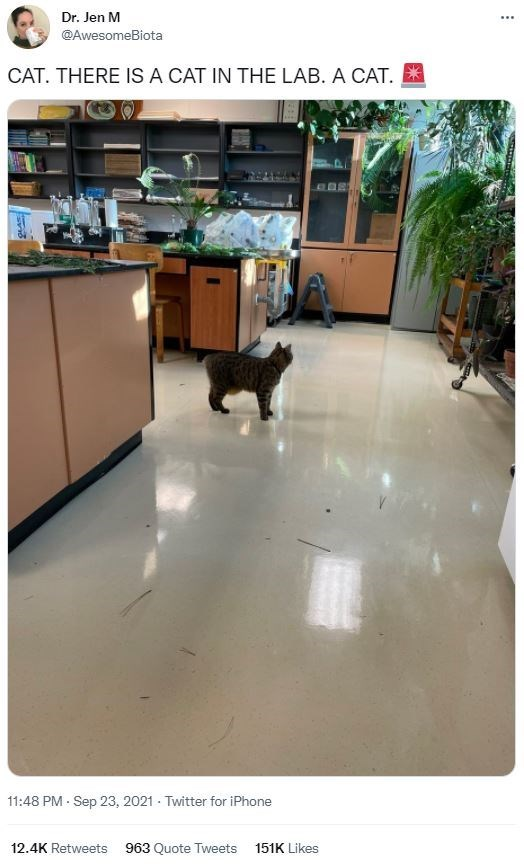 Property - Dr. Jen M ... @AwesomeBiota CAT. THERE IS A CAT IN THE LAB. A CAT. 11:48 PM - Sep 23, 2021 - Twitter for iPhone 12.4K Retweets 963 Quote Tweets 151K Likes