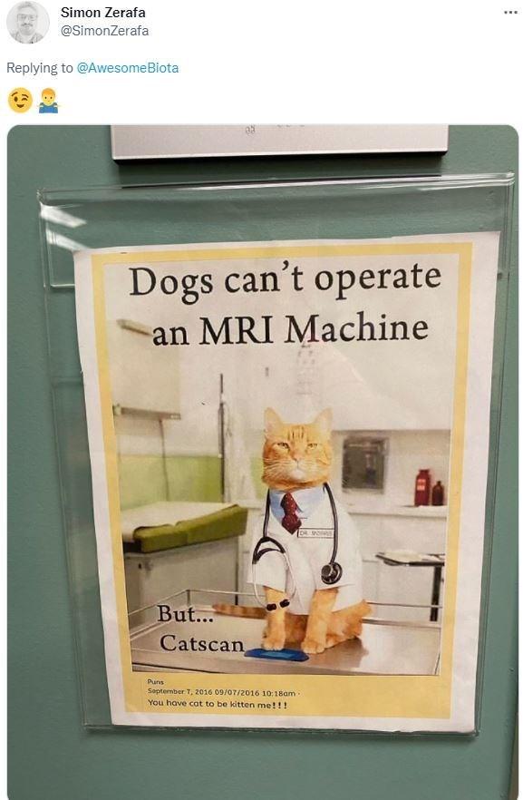 Shelf - Simon Zerafa @SimonZerafa Replying to @AwesomeBiota Dogs can't operate an MRI Machine But... Catscan Puns Soptember 7, 2016 09/07/2016 10:1sam You have cat to be kitten me!!!