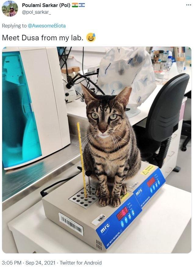 Cat - Poulami Sarkar (Pol) EI @pol_sarkar_ Replying to @AwesomeBiota ... Meet Dusa from my lab. mrc 3:05 PM Sep 24, 2021 - Twitter for Android OFAN mrc
