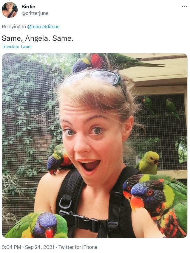 Vertebrate - Birdie ... @critterjune Replying to @marceldirsus Same, Angela. Same. Translate Tweet 9:04 PM Sep 24, 2021 · Twitter for iPhone