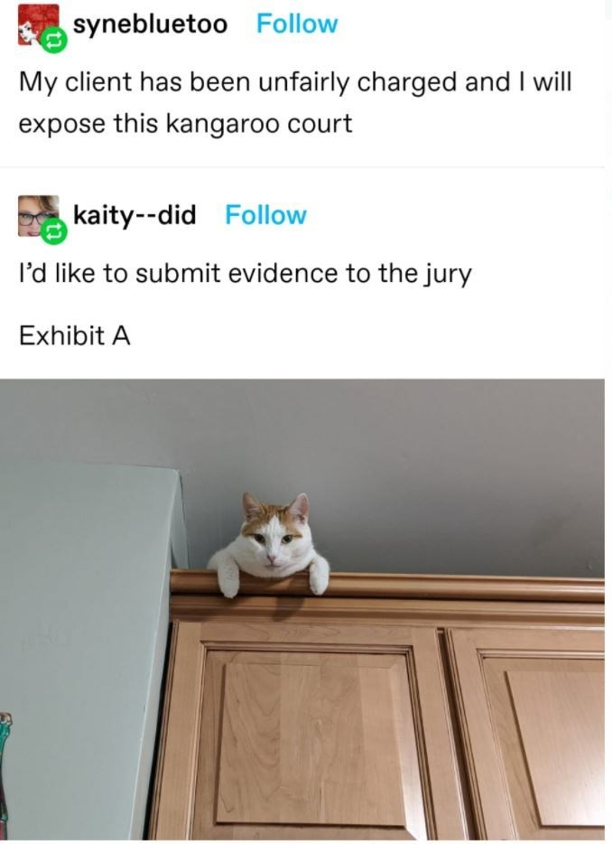 Cat - synebluetoo Follow My client has been unfairly charged and I will expose this kangaroo court kaity--did Follow I'd like to submit evidence to the jury Exhibit A