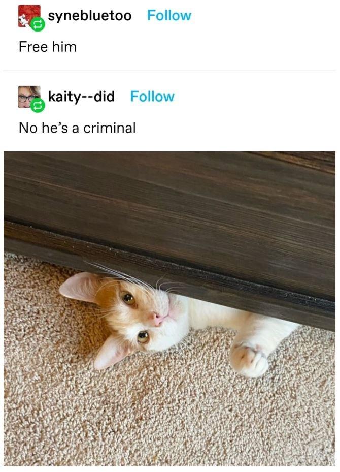 Cat - synebluetoo Follow Free him kaity--did Follow No he's a criminal