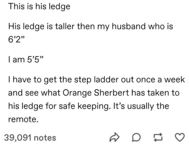 """Font - This is his ledge His ledge is taller then my husband who is 6'2"""" I am 5'5"""" I have to get the step ladder out once a week and see what Orange Sherbert has taken to his ledge for safe keeping. It's usually the remote. 39,091 notes"""