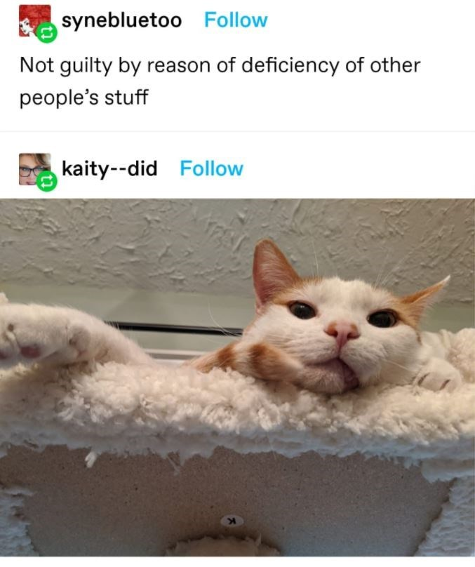 Cat - synebluetoo Follow Not guilty by reason of deficiency of other people's stuff kaity--did Follow