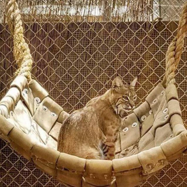 Felidae - 洲協