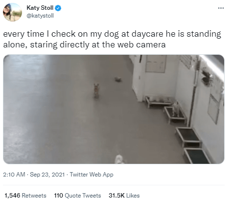 Product - Katy Stoll @katystoll every time I check on my dog at daycare he is standing alone, staring directly at the web camera 2:10 AM - Sep 23, 2021 - Twitter Web App 1,546 Retweets 110 Quote Tweets 31.5K Likes