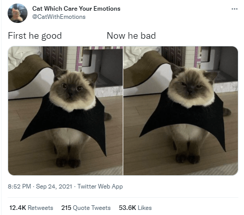 Vertebrate - Cat Which Care Your Emotions @CatWithEmotions First he good Now he bad 8:52 PM - Sep 24, 2021 - Twitter Web App 12.4K Retweets 215 Quote Tweets 53.6K Likes