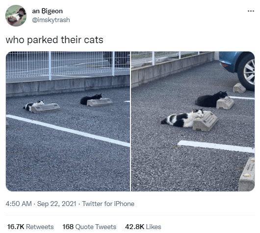 Asphalt - an Bigeon @imskytrash who parked their cats 4:50 AM - Sep 22, 2021 · Twitter for iPhone 16.7K Retweets 168 Quote Tweets 42.8K Likes