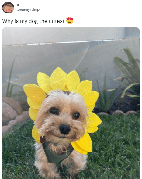 Flower - ... @nancyxvlsqz Why is my dog the cutest
