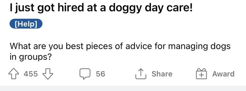 Font - I just got hired at a doggy day care! [Help] What are you best pieces of advice for managing dogs in groups? 455 5 56 1, Share + Award
