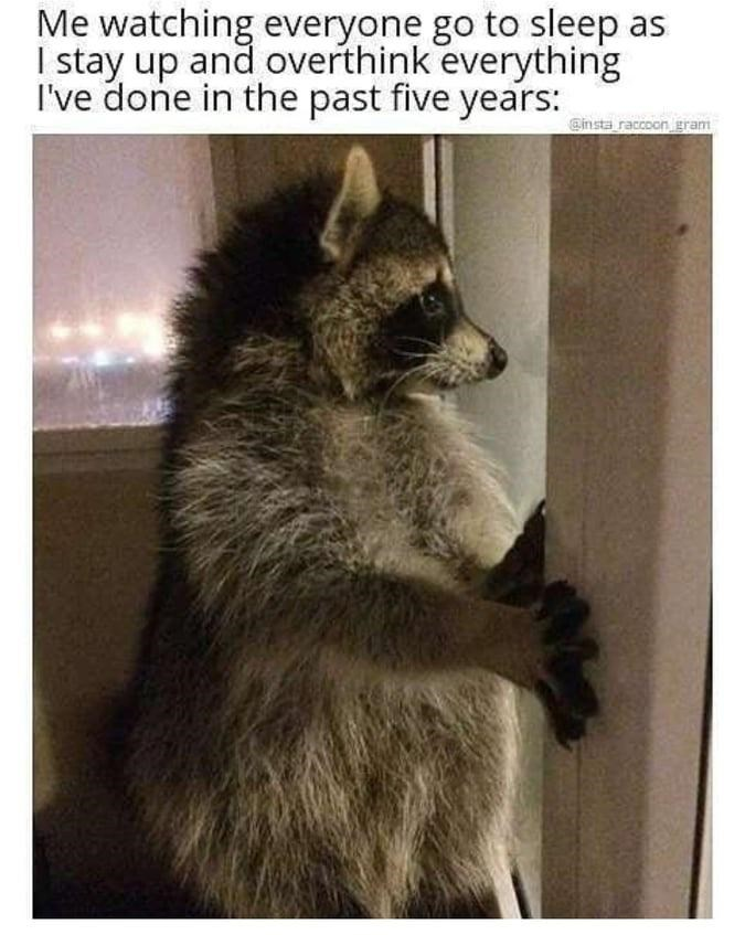 Carnivore - Me watching everyone go to sleep as I stay up and overthink everything I've done in the past five years: Ginsta raccoon gram