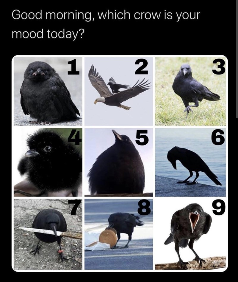 Photograph - Good morning, which crow is your mood today? 4 8 15