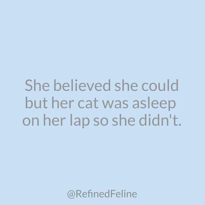 Font - She believed she could but her cat was asleep on her lap so she didn't. @RefinedFeline