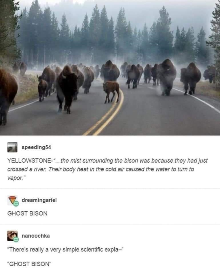 """Tree - speeding54 YELLOWSTONE-""""..the mist surrounding the bison was because they had just crossed a river. Their body heat in the cold air caused the water to turn to vapor."""" dreamingariel GHOST BISON nanoochka """"There's really a very simple scientific expla-"""" """"GHOST BISON"""""""